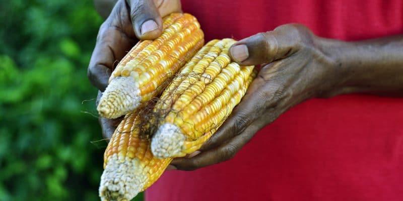 CEDEAO : 8 M€ de l'AFD pour la transition agroécologique© Red Pip/Shutterstock