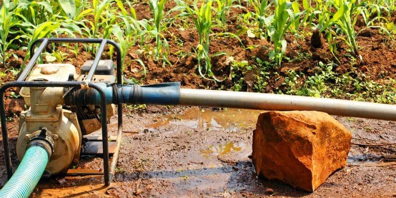 SAHEL : la Banque mondiale va financer un projet d'irrigation à hauteur de 25 M$ © Sylvie Bouchard/Shutterstock