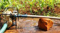 SAHEL: World Bank to finance $25 million irrigation project © Xavier Boulenger/Shutterstock