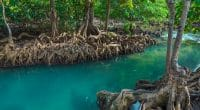 MADAGASCAR: Planting mangroves to improve fishermen's activity © De Rbk365/ Shutterstock