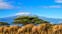 TANZANIE : réserve naturelle de Selous va être rasée pour produire de l'électricité © Paula French/Shutterstock