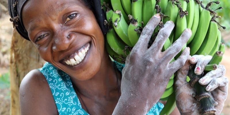 GHANA : Agrocenta retisse le lien entre consommateurs et petits producteurs agricoles©Dietmar Temps /Shutterstock