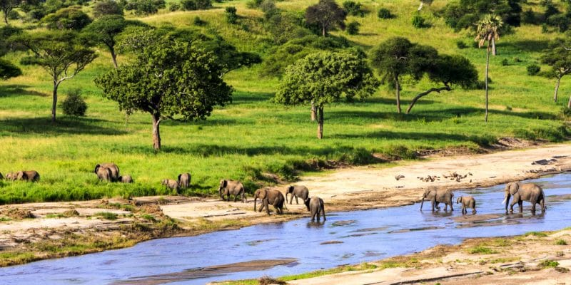 TANZANIE : vers la création de 5 nouveaux parcs dans le sud du pays, pour le tourisme©GTS Productions /Shutterstock