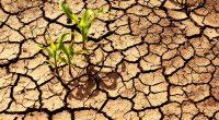 AFRIQUE : La FAO et le SPG lancent Afrisoils, un programme de protection des sols©Meryll//shutterstock