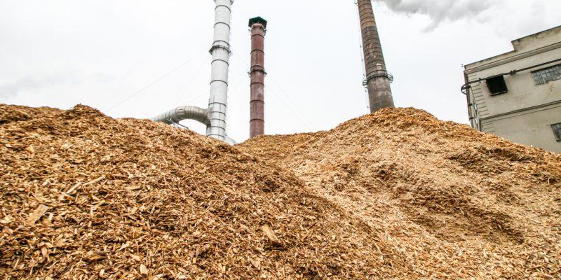 KENYA : Africa Plantation Capital va fournir de la biomasse de bambou à Bidco Africa ©Rokas Tenys/shutterstock