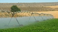 MAURITANIE : lancement du projet d'appui à l'initiative d'irrigation au Sahel © Adele D/shutterstock