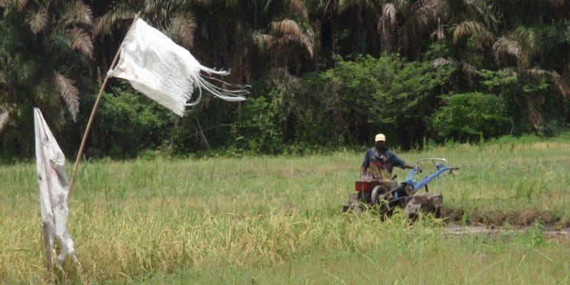 KENYA : les agriculteurs vont bénéficier du système d'irrigation de Davis & Shirtliff © BOULENGER Xavier /Shutterstock