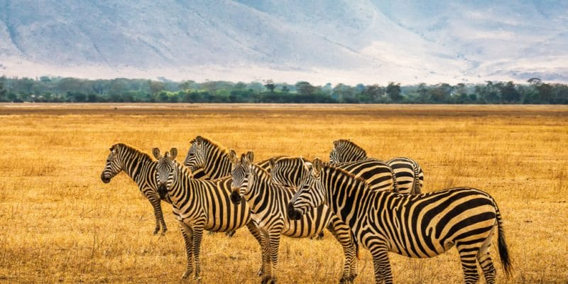 TANZANIA: Positive tourism figures for the Ngorongoro Conservation Area © Nick Fox /Shutterstock