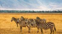 TANZANIE : les bons chiffres du tourisme dans l'aire de conservation de Ngorongoro © Nick Fox /Shutterstock