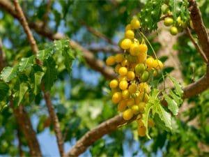 BENIN: Start-up Bio Phyto supplies organic fertilisers to farmers... A first!