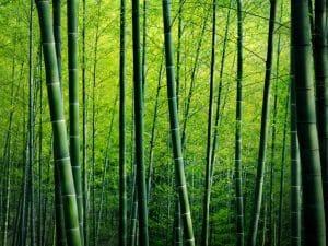 KENYA : Africa Plantation Capital va fournir de la biomasse de bambou à Bidco Africa ©Raw Pixel/shutterstock