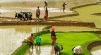 OUGANDA : le gouvernement indien investit 200 M$ dans l'énergie et l'irrigation ©Jen Watson/Shutterstock