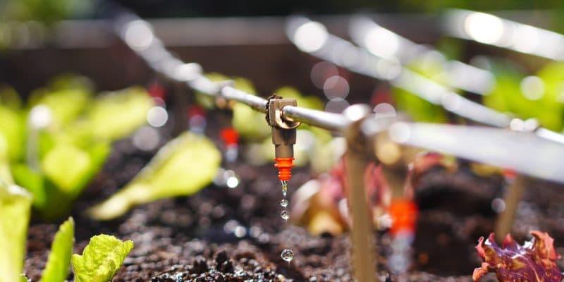 AFRIQUE DE L'OUEST : Interplast lance Ingreen, un nouveau système d'irrigation ©Floki/Shutterstock