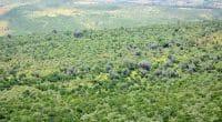 TANZANIE : le tourisme incite à protéger 5,2 millions d'hectares de forêt d'ici 2030 ©Attila JANDI/Shutterstock