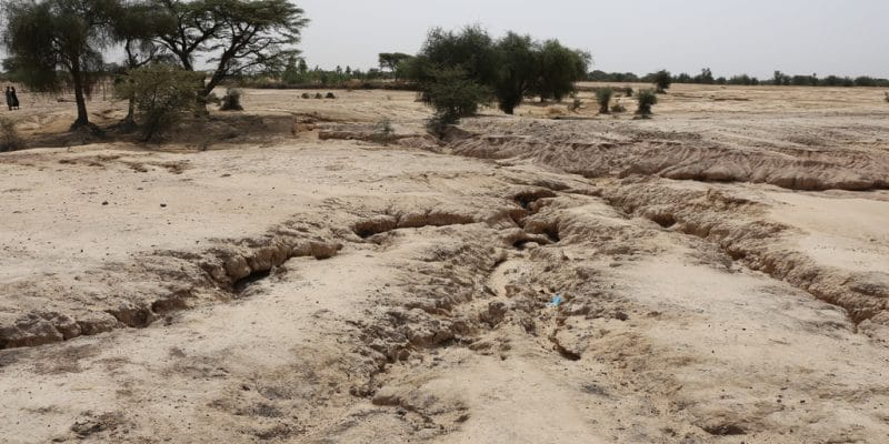 SENEGAL: Eight African countries to meet in Dakar to tackle desertification© BOULENGER Xavier/Shutterstock