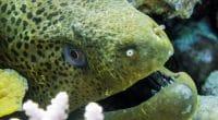MADACAR : Les États-Unis investissent 45 M$ dans la préservation de la biodiversité marine ©Hendrik Martens/Shutterstock