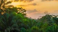 AFRIQUE : le Forum mondial sur les paysages prévu en août 2018 au Kenya© Fabian Plock/Shutterstock