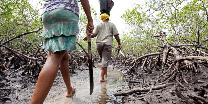 AFRIQUE DE L'OUEST : lancement d'un projet de conservation des zones humides à Dakar©Jen Watson/Shutterstock