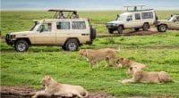 AFRIQUE DU SUD : l'économie de la biodiversité pourrait créer 162000 emplois ©Kanokratnok/Shutterstock