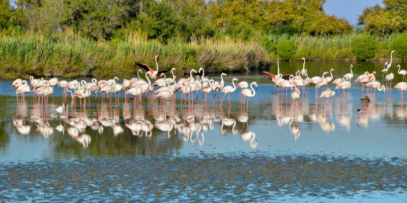 Flamants roses dans une zone humide © Christian Musat/Shutterstock