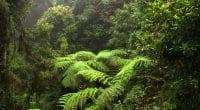 COTE D'IVOIRE : 21 M€ du gouvernement et de la Banque mondiale pour la reforestation ©Jen Watson/Shutterstock