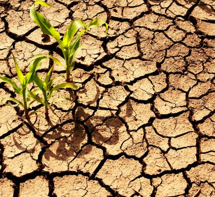 AFRICA: African Climate Week to focus on international action© Meryll/Shutterstock