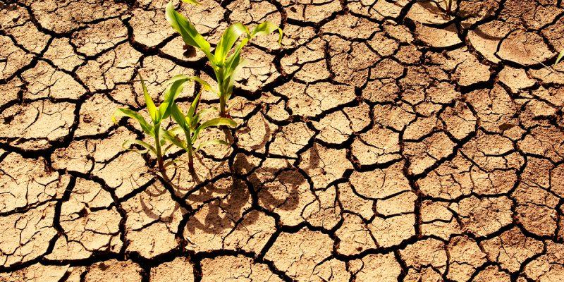 AFRIQUE : l'acte 2 du sommet «Climate Chance-Africa» se jouera à Accra au Ghana© Meryll/Shutterstock