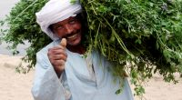 MOROCCO: ADA provides farmers with climate vulnerability mapping© ChameleonsEye/Shutterstock