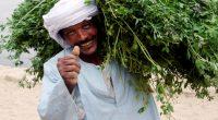 MAROC : l'ADA dote les agriculteurs d'une cartographie de vulnérabilité au climat© ChameleonsEye/Shutterstock