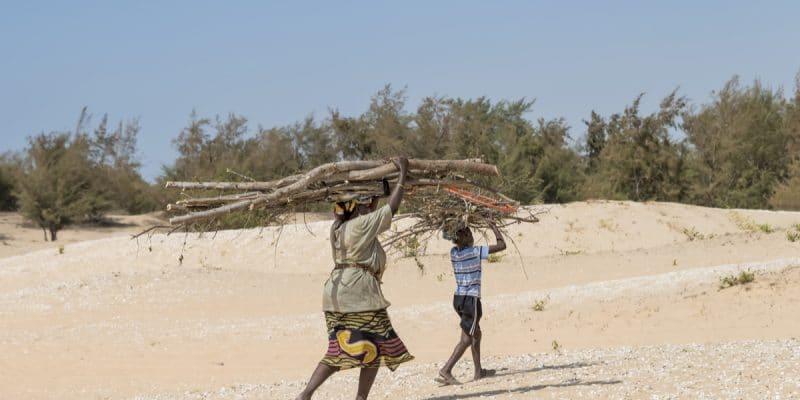 NIGÈRIA : «Green Recovery Nigeria», doit éviter 500 m2 de désertification par an©DiversityStudio/Shutterstock
