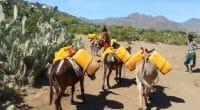 ETHIOPIA: Xuzhou Construction inaugurates 41 water tanks for Goleba Qulito village© Protasov AN/Shutterstock