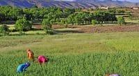 AFRICA: GCF funds $110 million climate change adaptation programme© ANDREA DELBO/Shutterstock