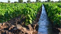 AFRICA: Irrigation project for Sahel launched in Ouagadougou© Andrii Yalanskyi/Shutterstock