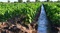 KENYA: 642 basins installed to improve irrigation in rural areas© Andrii Yalanskyi/Shutterstock