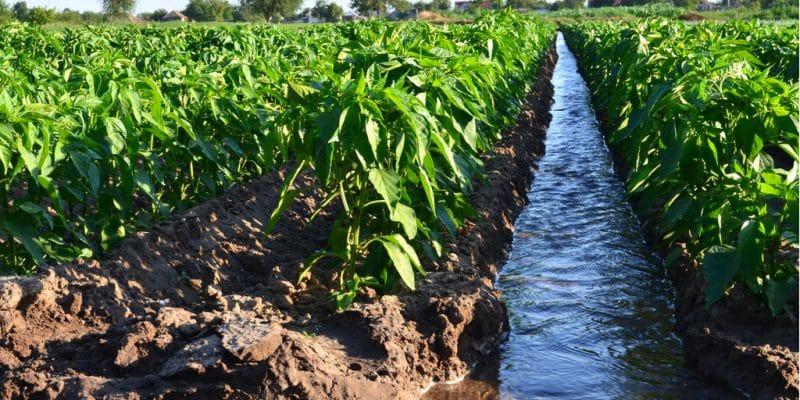 AFRIQUE : lancement à Ouagadougou, d'un projet d'irrigation pour le Sahel© Andrii Yalanskyi/Shutterstock