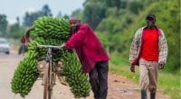 UGANDA: Climate change adaptation plan for agriculture adopted©GUDKOV ANDREY/Shutterstock