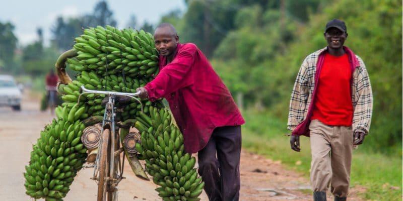 OUGANDA : le plan d'adaptation au changement climatique pour l'agriculture est adopté©GUDKOV ANDREY/Shutterstock