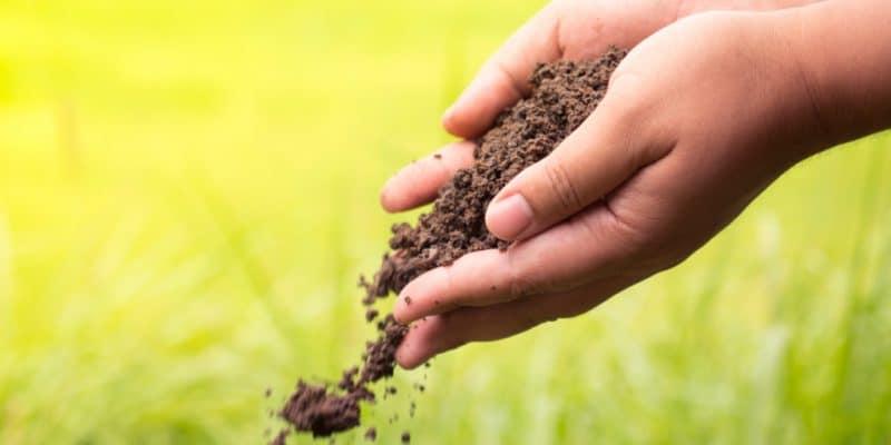 MAROC : une jeune scientifique propose du biogaz et des fertilisants aux agriculteurs © Singkham/Shutterstock