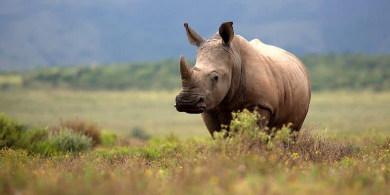 KENYA: Elephants and rhinos gradually escape the claws of poaching©JONATHAN PLEDGER /Shutterstock
