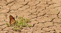 COP24 : 50 Md $ de la Banque mondiale pour l'adaptation aux changements climatiques©Netta Arobas/Shutterstock