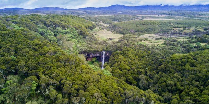 KENYA : comment le gouvernement a reboisé plus de 14000 hectares de forêts en 9 ans© Rich Carey/Shutterstock
