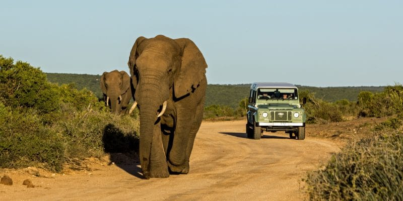 AFRICA: UAVs to curb elephant poaching©CarcharadonShutterstock
