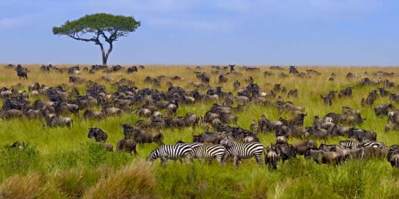 KENYA: UNDP launches $4 million project for biodiversity conservation© Alina Lavrenova/Shutterstock