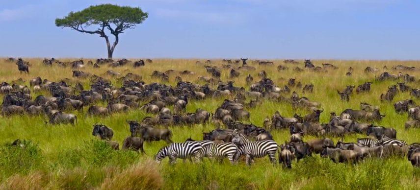 KENYA: UNDP launches $4 million project for biodiversity conservation© Alina Lavrenova/Shutterstock