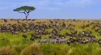 KENYA : le Pnud lance un projet de 4 M$ pour la conservation de la biodiversité©Alina Lavrenova/Shutterstock