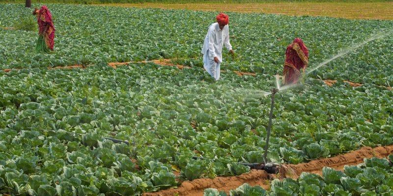 MOZAMBIQUE : comment l'agriculture est devenue résiliente au changement climatique ©Hari Mahidhar /Shutterstock