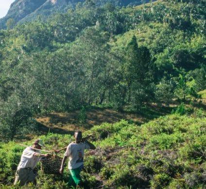TOGO : en dix ans, le Pnud a financé 2,3 M€ pour la protection de l'environnement©Kelsie DiPerna/Shutterstock
