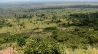BURUNDI: Towards Phase 2 of Virtuous and Profitable Landscape Restoration Project©wayak/Shutterstock