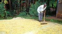 AFRIQUE : les prescriptions du World Resources Institute, pour nourrir sans détruire © PecoldShutterstock