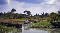 AFRIQUE DE L'EST : le FEM finance un projet d'assainissement du lac Victoria ©DeanP/Shutterstock